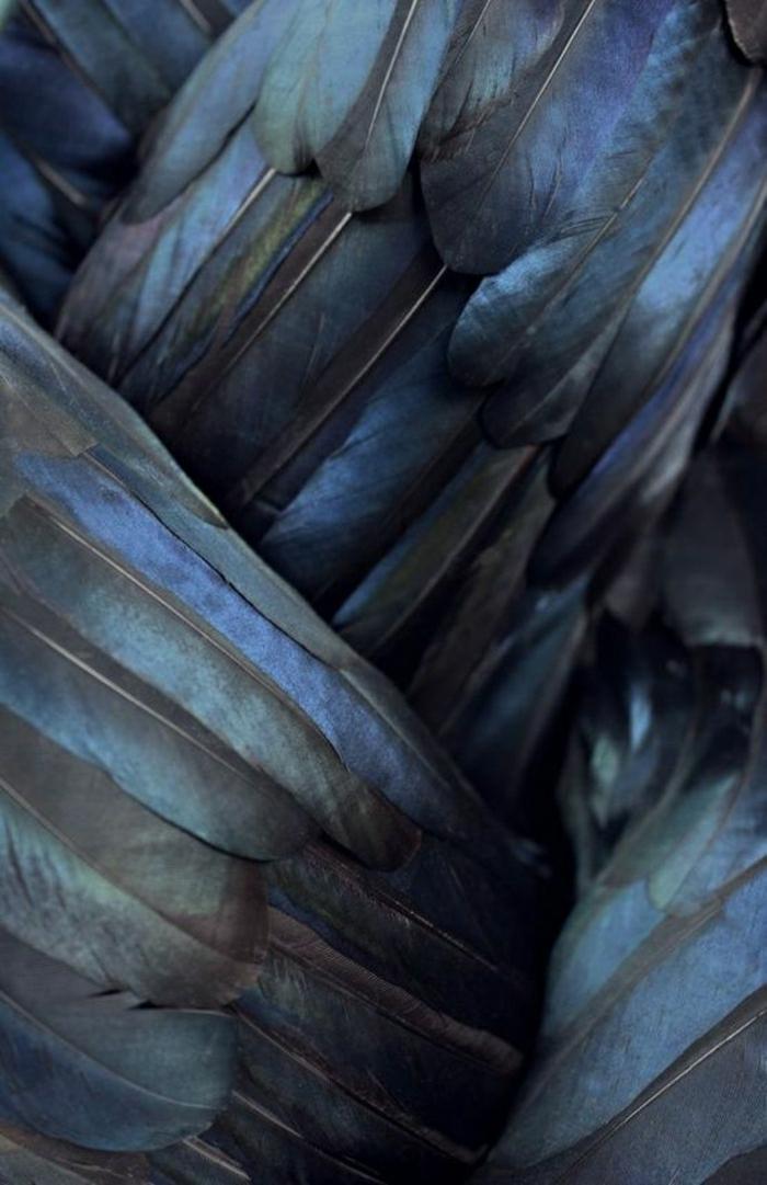 bunte-Federn-Rabe-dunkelblau