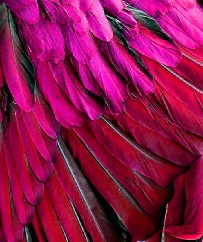 bunte-Federn-rot-rosa-exotisch