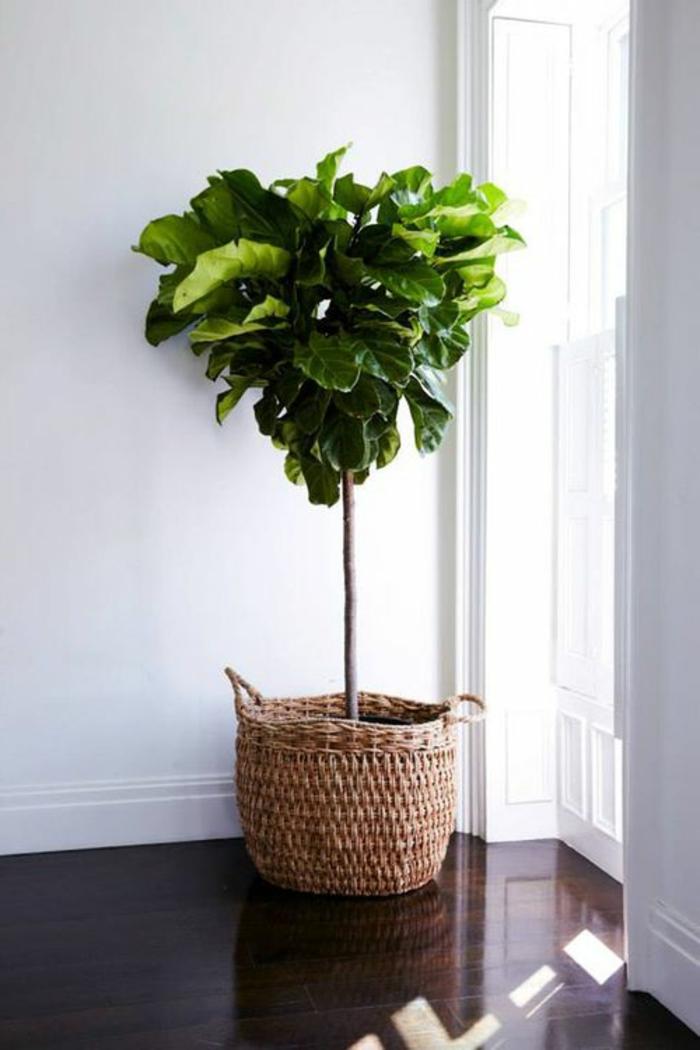 dekoration-im-wohnzimmer-schöne-grüne-pflanze