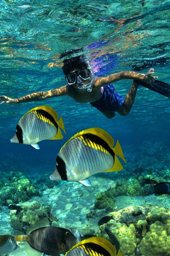 exotische-Fische-unter-Wasser-Attraktion-Ozean-Big-Island-Hawaii