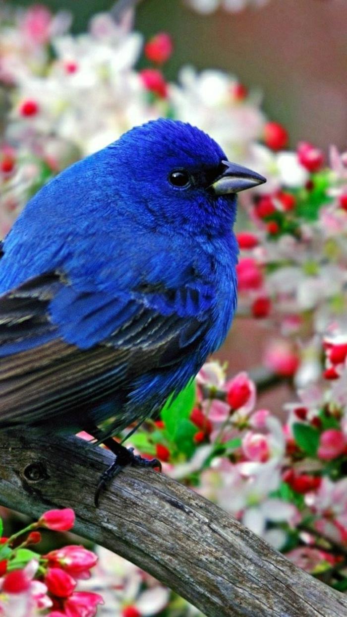 exotischer-Vogel-blauer-Kopf