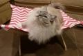 Die Hängematte für Katzen ist ein absoluter Hit!