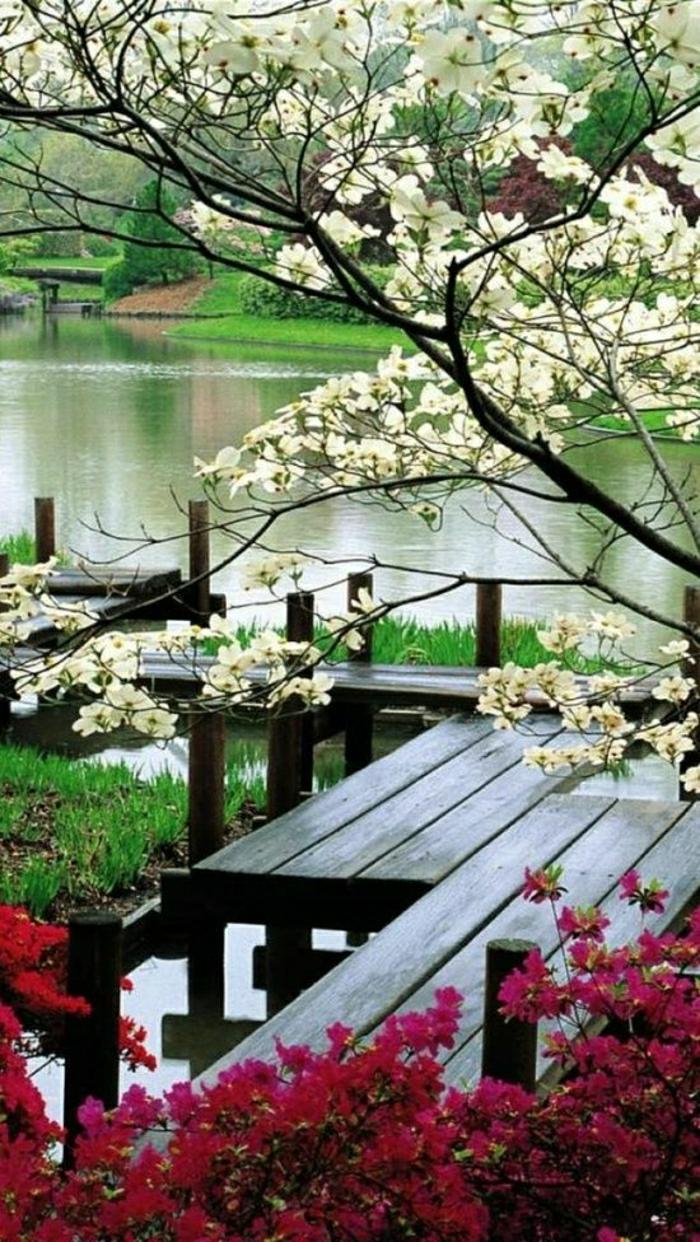 japanischer-Garten-See-Baumbüten-ruhige-Atmosphäre