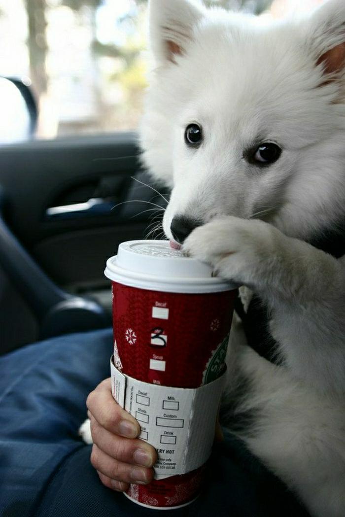 lustiges-Foto-Hund-Starbucks-Kaffeebecher-to-go