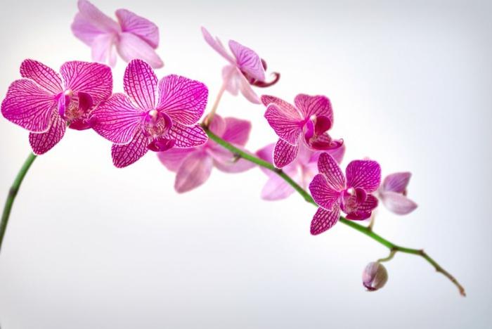 die bestens bekannten orchideen arten. Black Bedroom Furniture Sets. Home Design Ideas