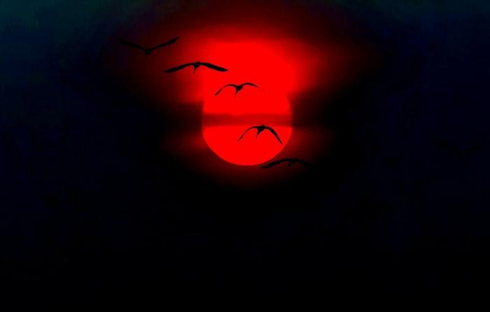 rote-sonne-vögel-im-himmel