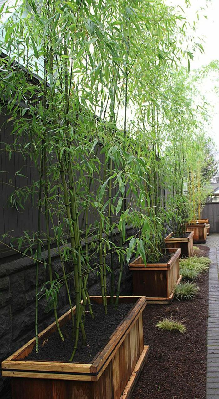 sichtschutz-ideen-große-grüne-pflanzen