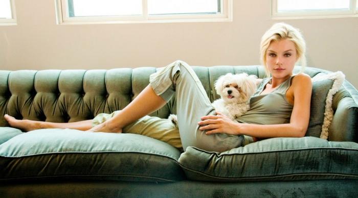 Hund Pinkelt Auf Sofa