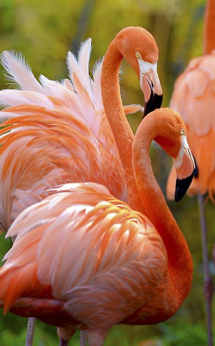 zwei-Flamingos-rosa-Federn-schön-exotisch