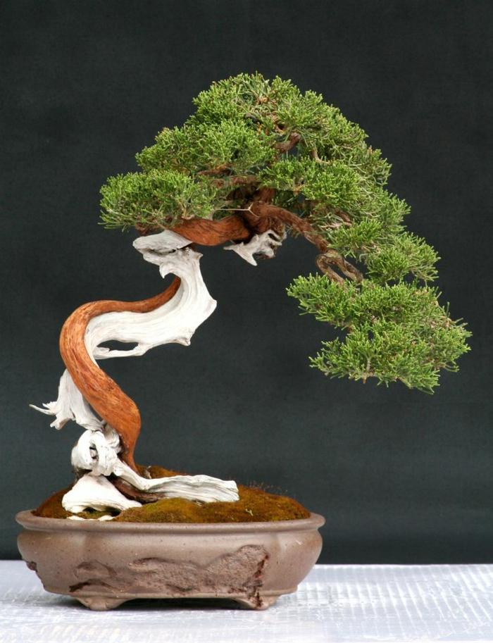 Bonsai-Baum-interessante-Form-originell-art