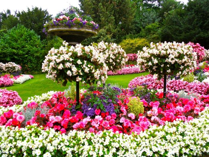 Blumen-Blüten-grelle-Farben-Garten-englisches-Modell