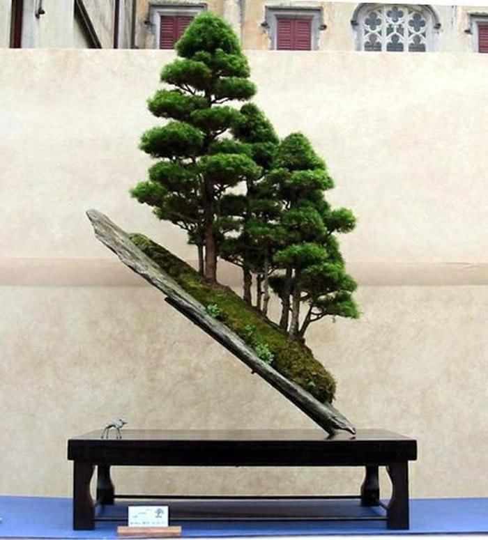 Bonsai-Bäume-Ständer-ungewöhnliche-Komposition