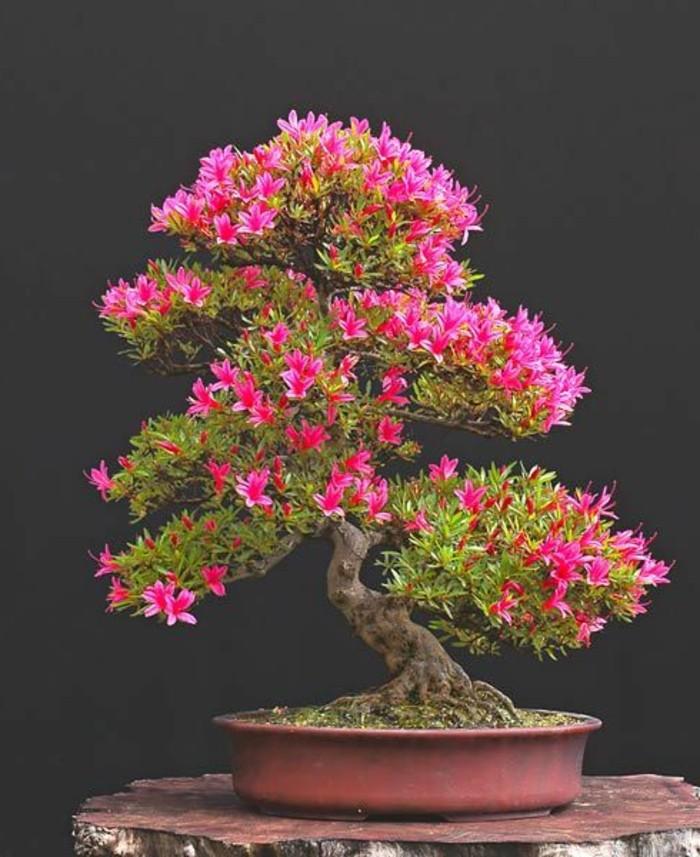 Bonsai-Baum-Blumen-Blüten-Azaleen