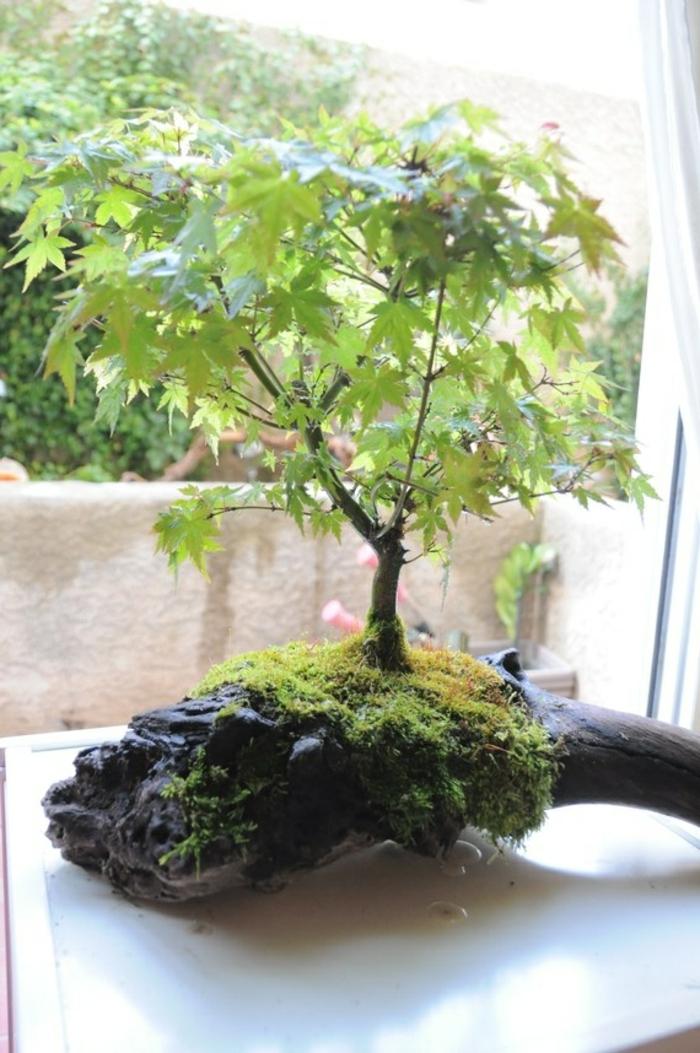 Bonsai-Baum-Treibholz-Ständer-kreativ