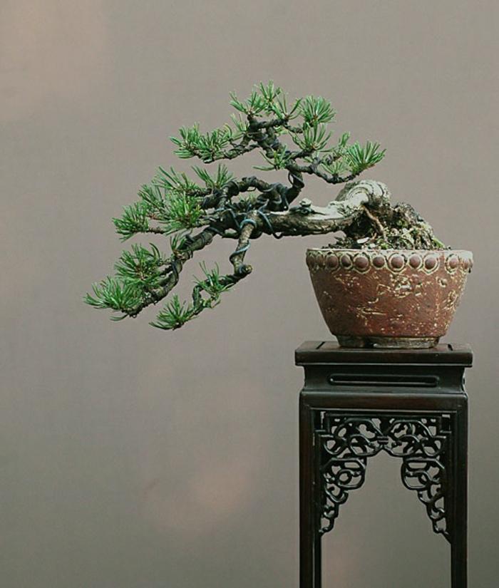 Bonsai-Baum-interessante-Form-ungewöhnlich-malerisch-schwarzer-vintage-Ständer-Blumentopf