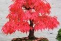 Wunderschöne Bonsai Baum Kompositionen