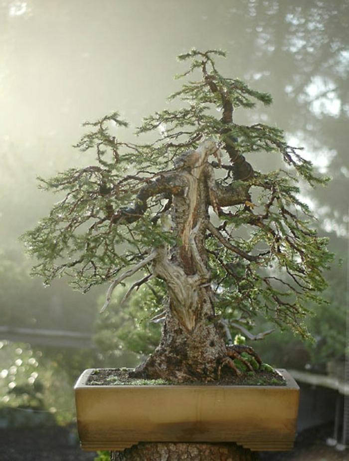 Bonsai-Baum-schön-mysteriös-großartig
