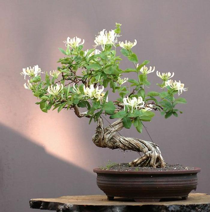 Bonsai-Blumentopf-Blüten-Art