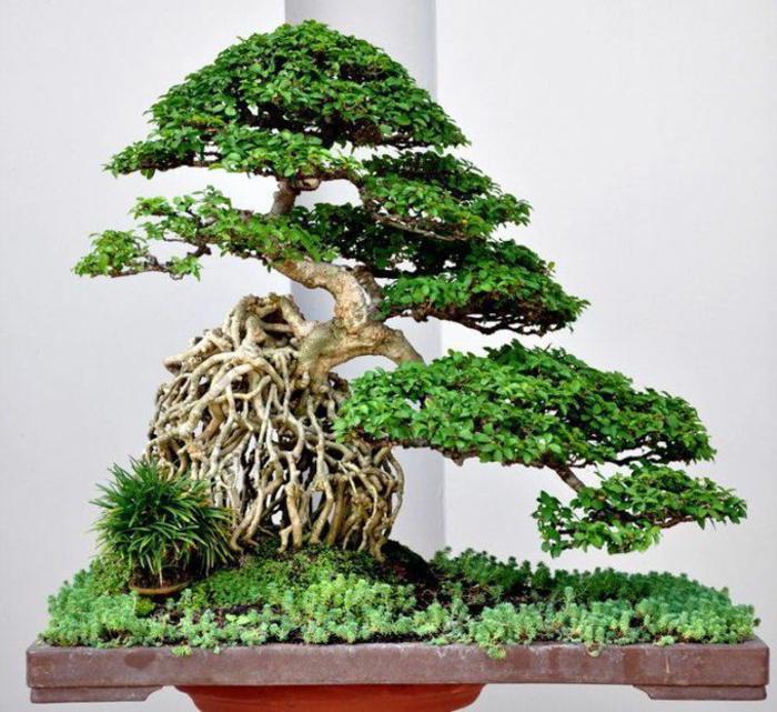 Bonsai-Kunst-Baum-Gras-schöne-Zusammensetzung