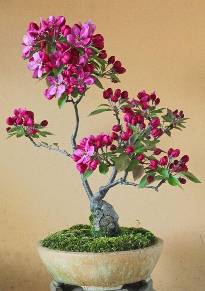 Bonsai-Kunst-Blume-Zyklamen-Farbe-Moos-keramischer-Behälter