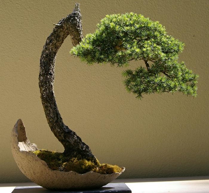 Bonsai-Baum-Nadelbaum-Schale-originelle-Komposition
