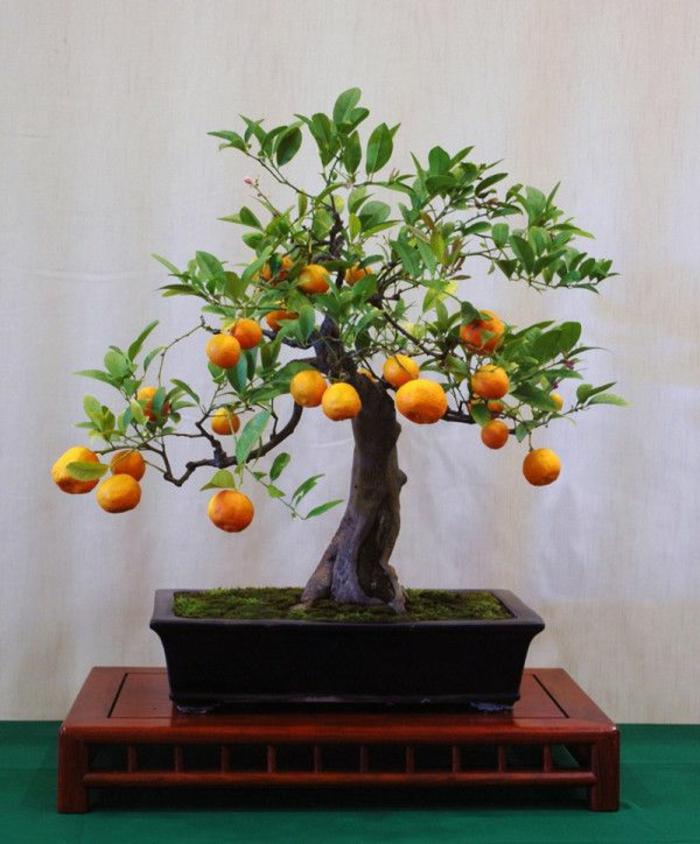 Bonsai-Orangenbaum-klein-süß-originelle-Idee