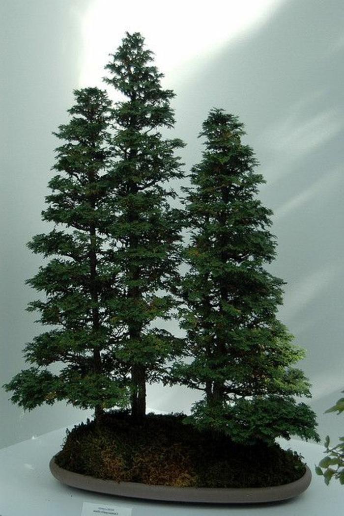 Bonsai-Wald-Nadelbäumen-Ständer