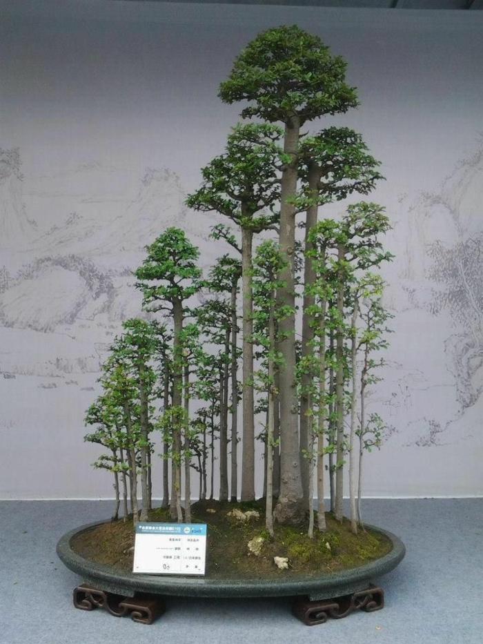 Bonsai-Wald-hohe-Bäume-Moos-Bett-schöne-Komposition