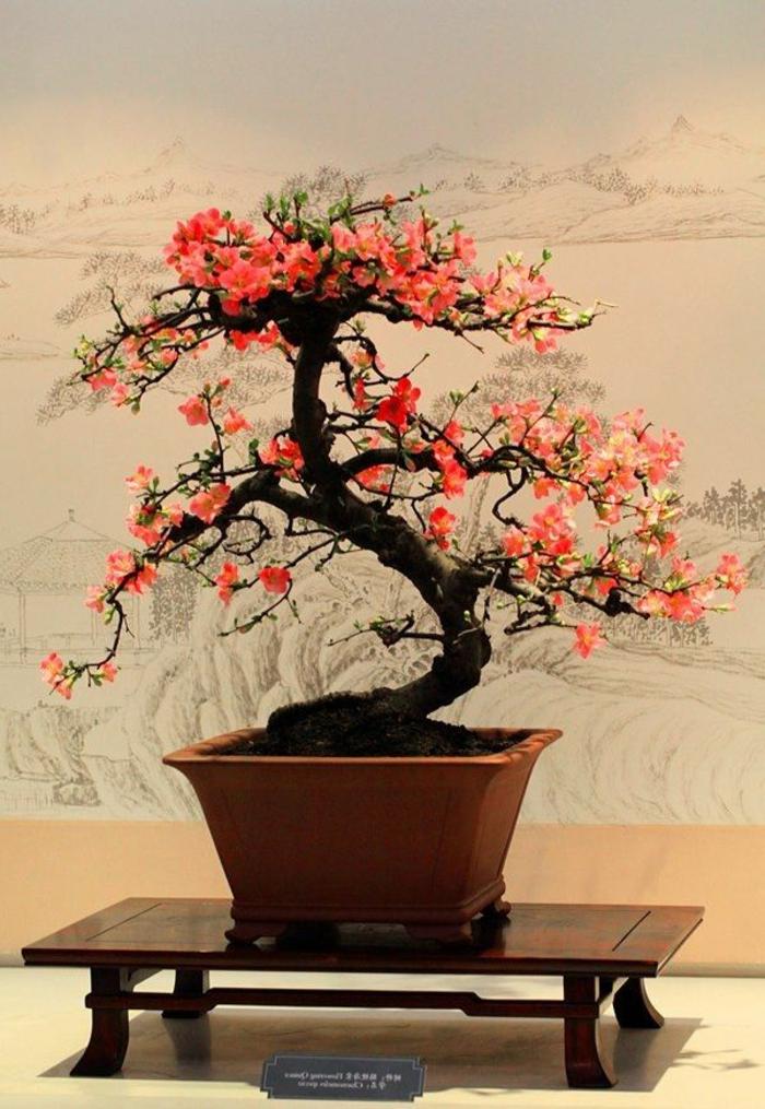 Bonsai-romantsich-aussehende-Blüten-attraktiv-schön