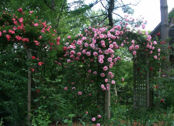 Garten-englisches-Design-Bogen-Rosen