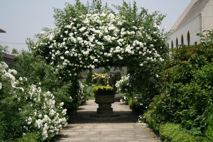 Garten-weiße-Rosen-Metall-Bogen-aristokratisch-britisch