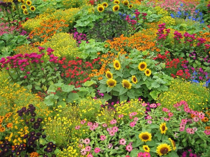 Hamilton-Gardens-british-herrliche-Blumen-grelle-Farben-Sonnenblumen