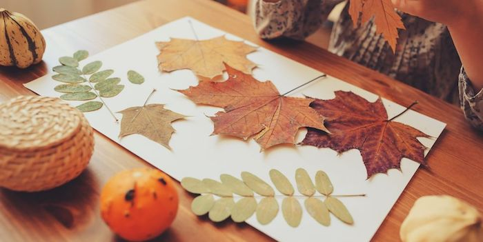 Herbstblätter in verschiedenen Formen und Farben sammeln, Basteln mit Kindern im Herbst