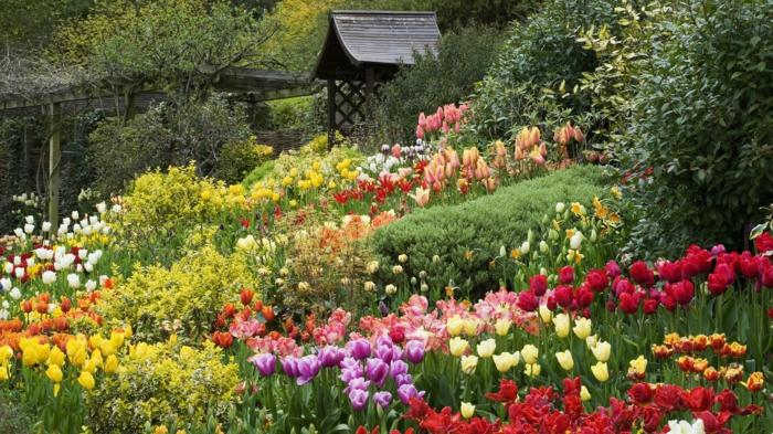 Englischer garten frisch herrlich tulpen verschiedene farben