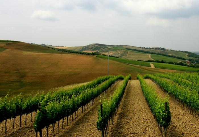 forst-und-landwirtschaft-grüne-bepflanzungen