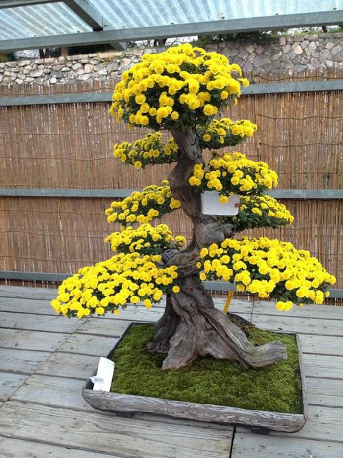 groser-gelber-Blüt-Bonsai-Blumen-Moos-Bett