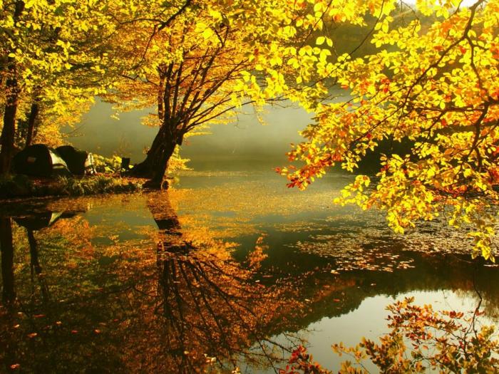 herbst hintergrundbilder - viele gelbe blätter