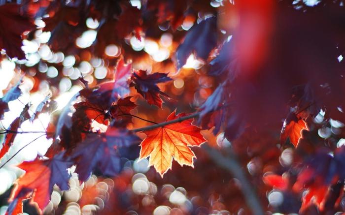 hintergrundbilder-zum-herbst-herrliche-farbkombination
