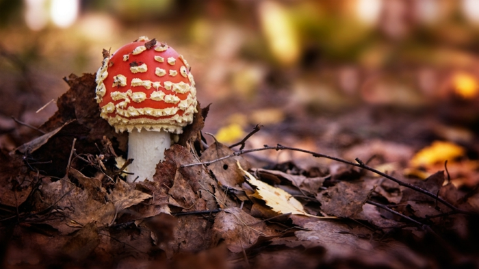 hintergrundbilder-zum-herbst-interessante-pilze