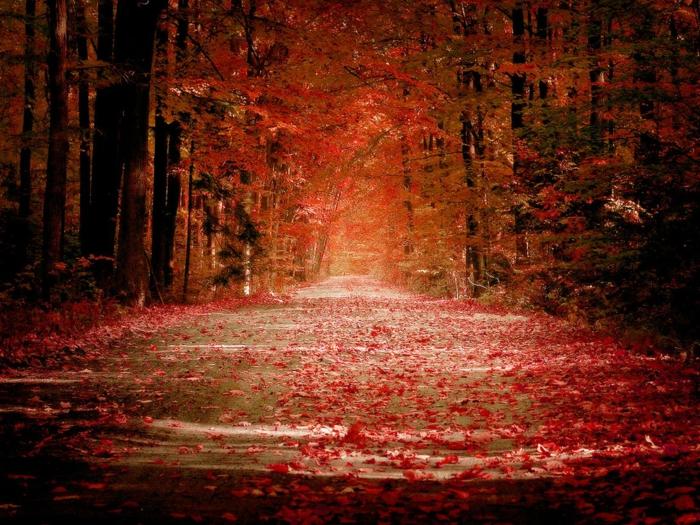 hintergrundbilder-zum-herbst-rötliche-farbschemen