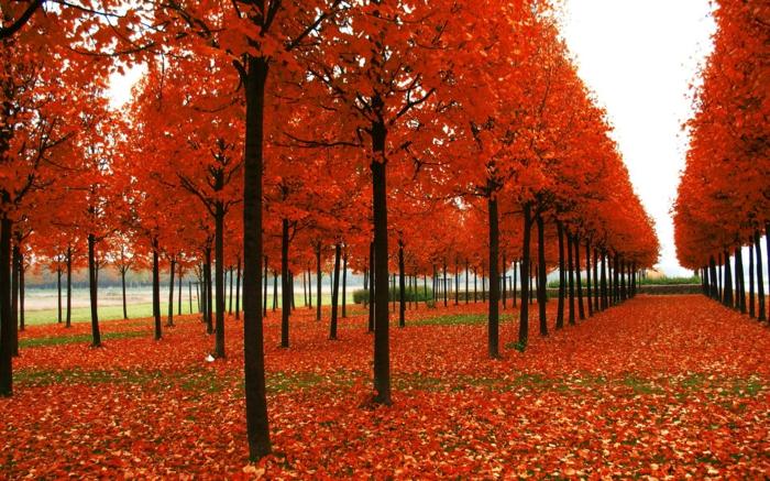 hintergrundbilder-zum-herbst-rote-farbschemen