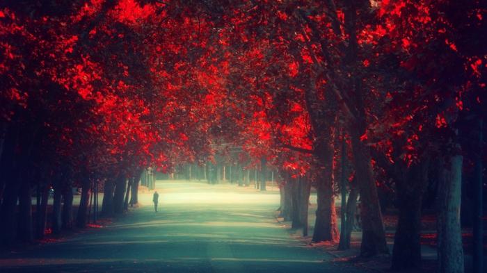 hintergrundbilder-zum-herbst-rote-interessante-blätter