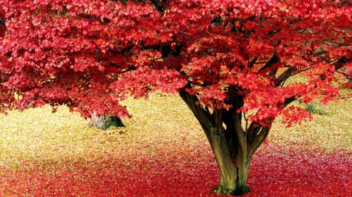 hintergrundbilder-zum-herbst-schöner-baum-rote-blätter