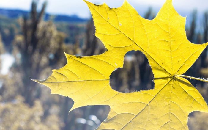 hintergrundbilder-zum-herbst-sehr-schöne-gelbe-blätter