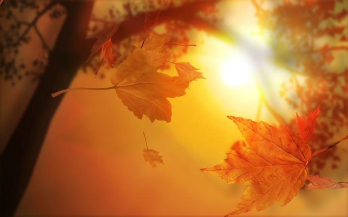 hintergrundbilder-zum-herbst-sehr-schöne-orange-farbschemen