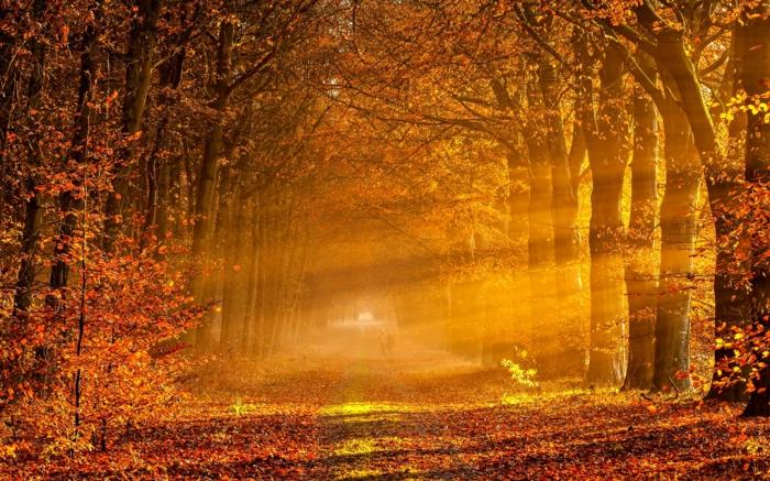 hintergrundbilder-zum-herbst-sonnige-farbe