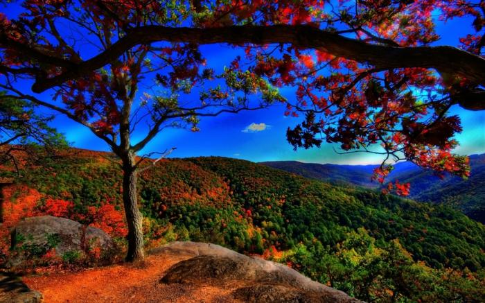 hintergrundbilder-zum-herbst-tolles-aussehen