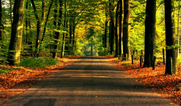 hintergrundbilder-zum-herbst-viele-bäume