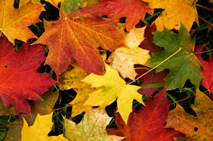 65 schöne Hintergrundbilder zum Herbst!