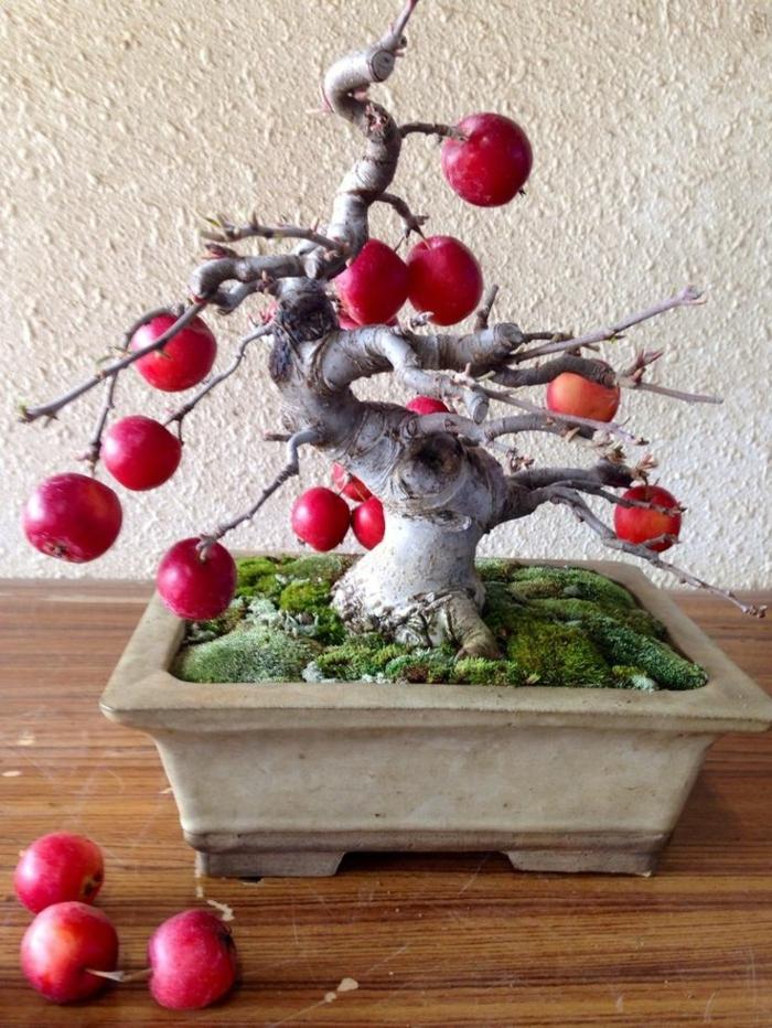 japanische-Kunst-Bonsai-Apfelbaum